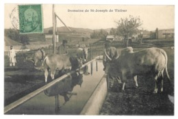 Tunisie. Thibar, Domaine Saint Joseph (4482) - Tunisia