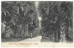 Ceylon - Ceylan - Talipot Palms Peradeniya Gardens - Sri Lanka (Ceylon)