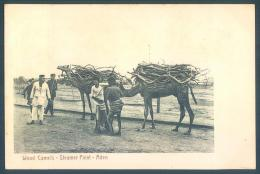 Lot  4 Postcards ADEN Camels Chameaux - Yemen