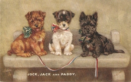 """""""Mabel Gear.Jack, Jack And Pddy"""" TuckOilette Playful Pets Ser PC #3597 - Tuck, Raphael"""