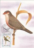 """734 S. Tomè E Principe 1983 Birds FDC Estrilda Astrild Angolensis """" Quebla-canan """"  Endemico Passeri Maximum Card Maxi - Sparrows"""