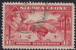 Sierra Leone 1938 - 44 KGV1 1 1/2d Scarlet SG 190 ( G1495 ) - Sierra Leone (...-1960)