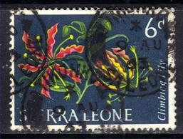 Sierra Leone 1963 QE2 6d Flowers Climbing Lily SG 248 ( G1349 ) - Sierra Leone (1961-...)