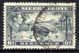 Sierra Leone 1938 - 44 KGV1  6d Grey SG 195 ( G1346 ) - Sierra Leone (...-1960)