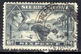 Sierra Leone 1938 - 44 KGV1  6d Grey SG 195 ( G1341 ) - Sierra Leone (...-1960)