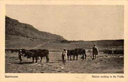 BASUTOLAND - Natives Working In The Fields - Lesotho