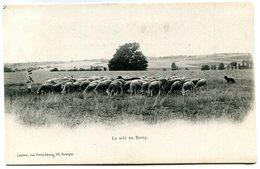 BERRY(TYPE) MOUTON - Autres Communes