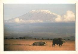 CP Explicative-Kenya-Amboseli Et Le Kilimandjaro                      L2680 - Kenya