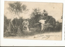CPA, Précurseur ,D.21, N°114, Côte D' Or , Scène De Vendanges , Ed. L.F. 1902 Dos Simple - Paysans
