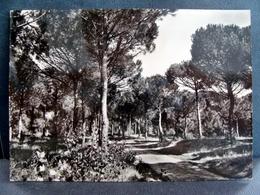 (FG.I39) RAVENNA - PINETA DI MARINA ROMEA (viaggiata 1965) - Ravenna