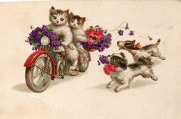 Vends Carte ' CHATS HUMANISES '     Motards    (pittius ) - Katzen