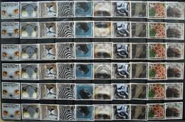 België 2013 Natuur De Zoo (6 Complete Reeksen) - Postzegels