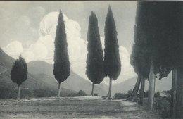 Lago Die Garda.  Gardasee. Cypressen Bei Gaino,    Italy.  S-4428 - Como