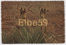 Legendary Animals Of The Plains Of America, The Jackalope, Used 1978 - Fiabe, Racconti Popolari & Leggende
