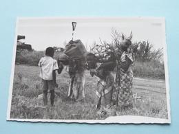 Les Femmes TRAVAILLENT - Fotokaart / Carte Photo ( Photo KIVU ) Anno 19?? ( Voir Photo ) ! - Autres