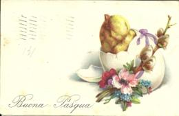 BUONA PASQUA   Pulcino Schiude L'uovo  Ramoscello - Pasqua