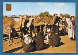 MARRUECOS TIPICO MERCADO DE CAMELLOS 1976 - Marocco