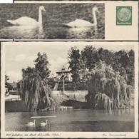 Allemagne 1938. Entier Timbré Sur Commande.  Schmölln, Thuringe. Am Brauereiteich, Parc, étang Avec Cygnes - Cygnes
