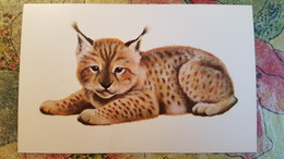 """""""Little Lynx"""" By Isakov - 1978 - OLD  Soviet  Postcard - Insects"""