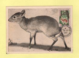 Carte Maximum - Cote D Ivoire - Antilope Royale - Abidjan - 1965 - Côte D'Ivoire (1960-...)