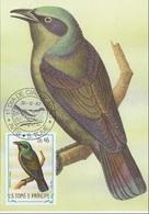"""747 S. Tomè E Principe 1983 Birds FDC Lamprotornis Ornatus """" Storno """"  Passeri Maximum Card Maxi - Owls"""
