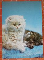 GATTO GATTI CHAT CATS  CARTOLINA - Gatti