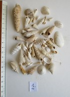 FOSSILE. LOT DIVERS GASTEROPODES. LUTETIEN. - Fossils