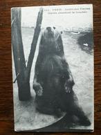 L11/1Paris. Jardin Des Plantes. Martin Attendant La Bouchée - Bears