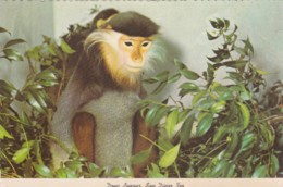DOUC LANGUR, SAN DIEGO ZOO - Monkeys