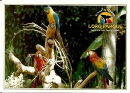 Perroquet Papegaai Parrot / Ara Macaw / Loro Parque Tenerife - Oiseaux