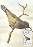 "732 S. Tomè E Principe 1983 Birds FDC Anabathmis Hartlaubii "" Uccello Del Sole "" Passeri Endemica Maximum Card Maxi - Sparrows"