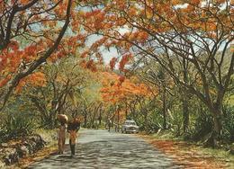 FLAME TREES MOKA ROAD MAURITIUS (130) - Mauritius