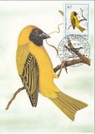 "731 S. Tomè E Principe 1983 Birds FDC Textor Velatus Peixoto. "" Camussela Galo "" Passeri Endemica Maximum Card Maxi - Sparrows"