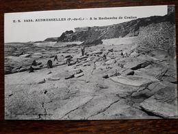 L11/24 Audresselles. A La Recherche De Crabes - France
