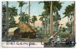 - CUBA - Cuban Landscape - Paisaje Cubano Animation, Palmiers, Trés épaisse, BE, Scans. - Cuba