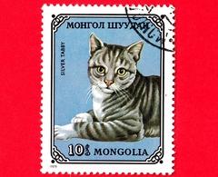 MONGOLIA - Usato - 1979 - Gatti Domestici - Silver Tabby (Felis Silvestris Catus) - 10 - Mongolia