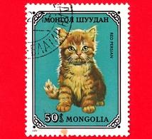 MONGOLIA - Usato - 1979 - Gatti Domestici - Red Persian (Felis Silvestris Catus) - 50 - Mongolia