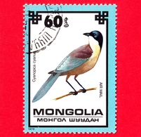 MONGOLIA - Usato - 1979 - Uccelli - Gazza - Azure-winged Magpie (Cyanopica Cyanus)  - 60 P. Aerea - Mongolia