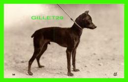 CHIEN - DOG - TERRIER NOIR ET FEU - LES RACES CANINES - ÉDITION A. N., PARIS - - Chiens