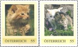 6228  Chat: Deux Timbres Personnalisés D'Autriche - Cat Personalized Stamps From Animal Protection Carnet From Austria - Gatos Domésticos