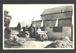 West-Vlaanderen - Vlas Bewerking / Lin / Flax / Flachs - Het Roten In Bassins - Geanimeerd - Uitgave Van Melle Gent - Cultures
