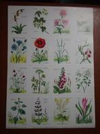 Planche éducative Volumétrix - N°46 - Botanique (les Familles De Plantes) - Learning Cards