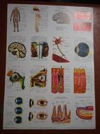 Planche éducative Volumétrix - N°73 - Anatomie (Nerfs - Oeil - Peau) - Learning Cards