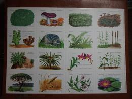Planche éducative Volumétrix - N°99 - Botanique (Classification - Plantes Cellulaires Et Vasculaires) - Learning Cards