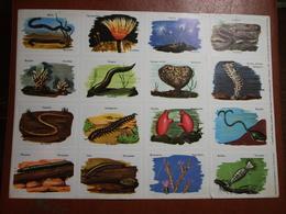 Planche éducative Volumétrix - N°103 - Annélides, Spongiaires, Myriapodes Et Vermidiens - Learning Cards