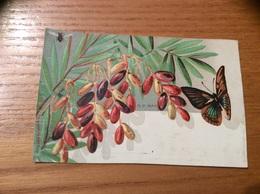 Marque-place Ch. D PARIS « Datte, Papillon, Insecte » - Menus