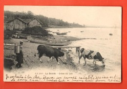 FKD-36  Genève, Port La Belotte, Grève Du Lac Vaches Et Paysan Précurseur Circulé Avec Timbre Français Vers L'Angleterre - GE Geneva