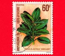 COSTA D'AVORIO - Usato - 1980 - Flora - Ficus Elastica - 60 - Costa D'Avorio (1960-...)