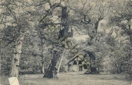 Urwald - Jagdhütte  (B1065 - Postcards