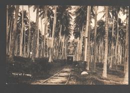 Penang / Pulau Pinang - View Of Penang - Photo Card - Train / Trein / Zug - Chemin De Fer / Eisenbahn / Railway - Malaysia